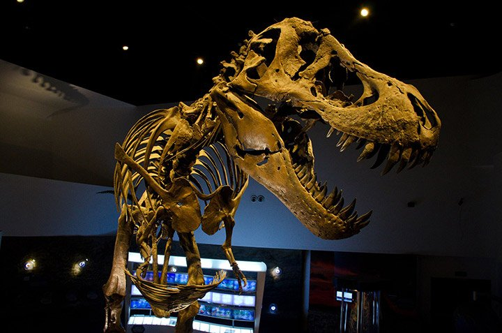 Stan, the T-Rex of Earth Gallery,